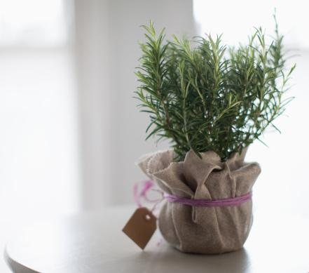 8 Powerful Herbs for Good Luck, Good Health, and Prosperity