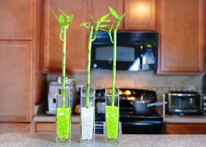 lucky bamboo kitchen