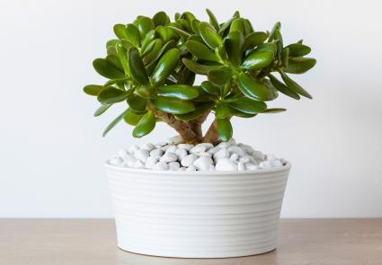 7 Auspicious Feng Shui Plants | LoveToKnow