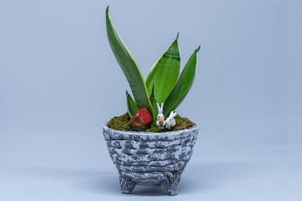 7 Auspicious Feng Shui Plants Lovetoknow