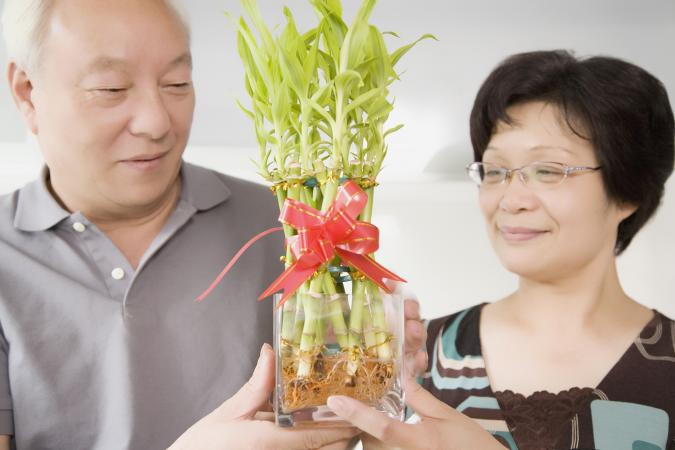 Couple holding lucky bamboo plant