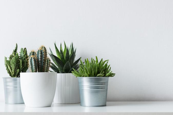 Inauspicious feng shui plants