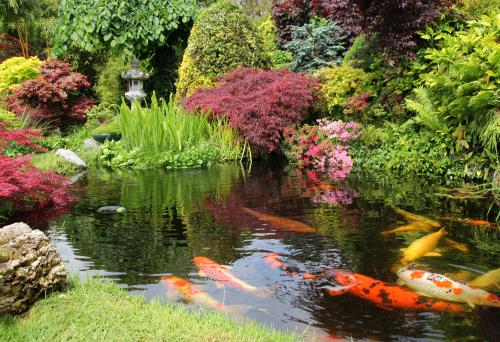 Koi pond in a backyard