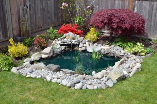 Pond in a backyard