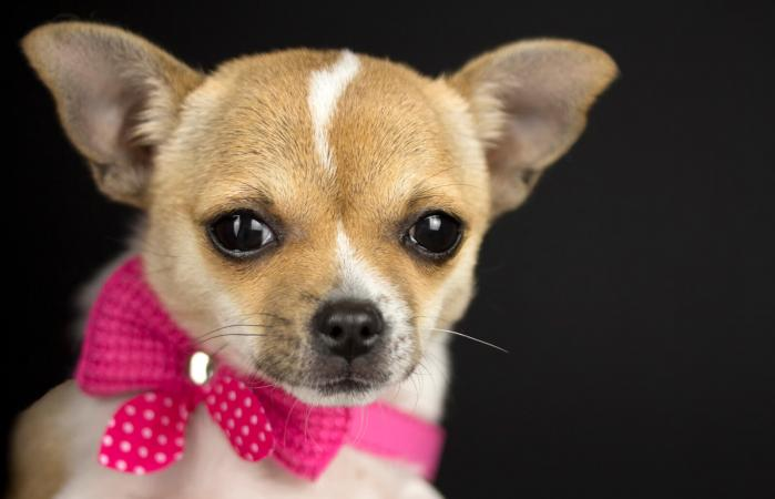 Dog with pink collar