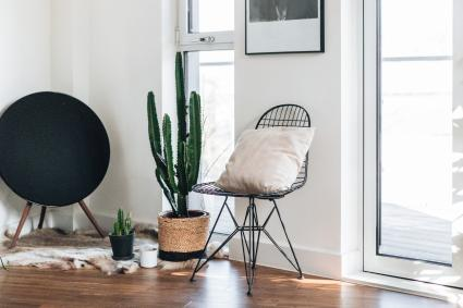 feng shui no cactus indoors