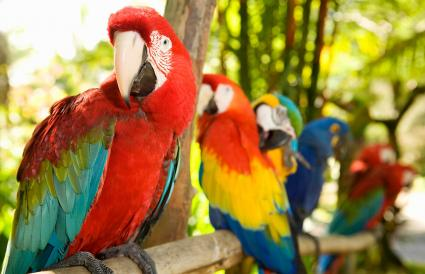 Parrots perched on branch