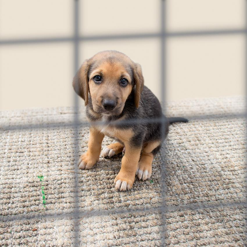 https://cf.ltkcdn.net/freelance-writing/images/slide/207479-850x850-Puppy-in-a-kennel.jpg