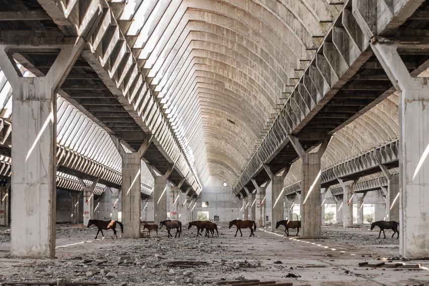 https://cf.ltkcdn.net/freelance-writing/images/slide/248030-850x566-wandering-horses.jpg