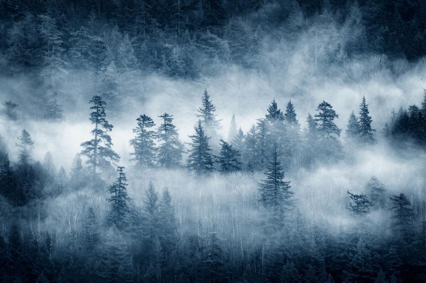 https://cf.ltkcdn.net/freelance-writing/images/slide/248039-850x566-forest-in-fog.jpg