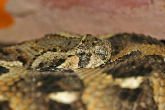 https://cf.ltkcdn.net/freelance-writing/images/slide/140196-849x565r1-snakes4.jpg