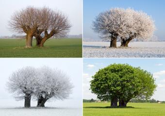 https://cf.ltkcdn.net/freelance-writing/images/slide/245576-850x600-tree-in-four-different-seasons.jpg