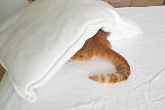 https://cf.ltkcdn.net/freelance-writing/images/slide/248042-850x566-cat-under-pillow.jpg