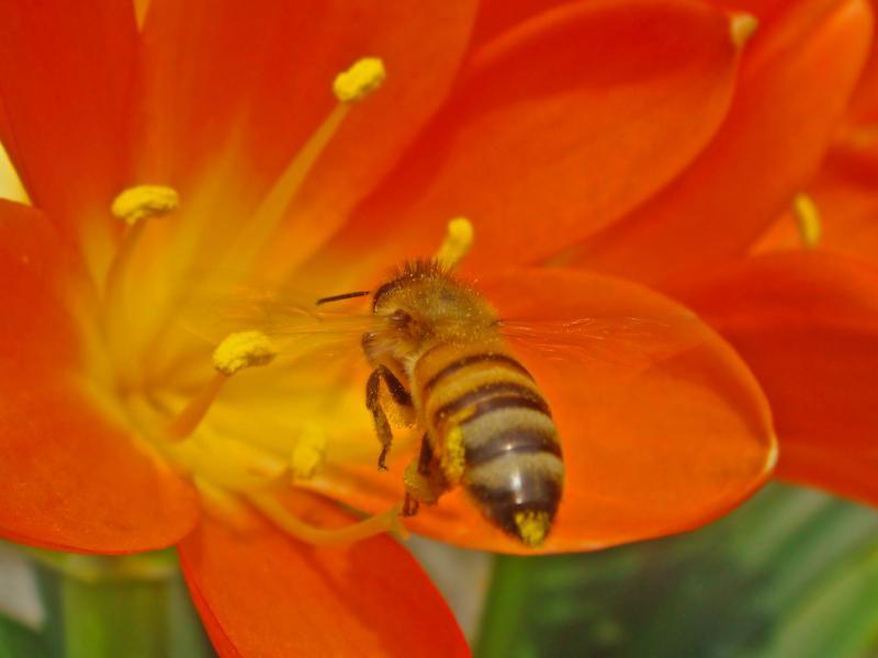 https://cf.ltkcdn.net/french/images/slide/124800-800x600-honeybee.jpg