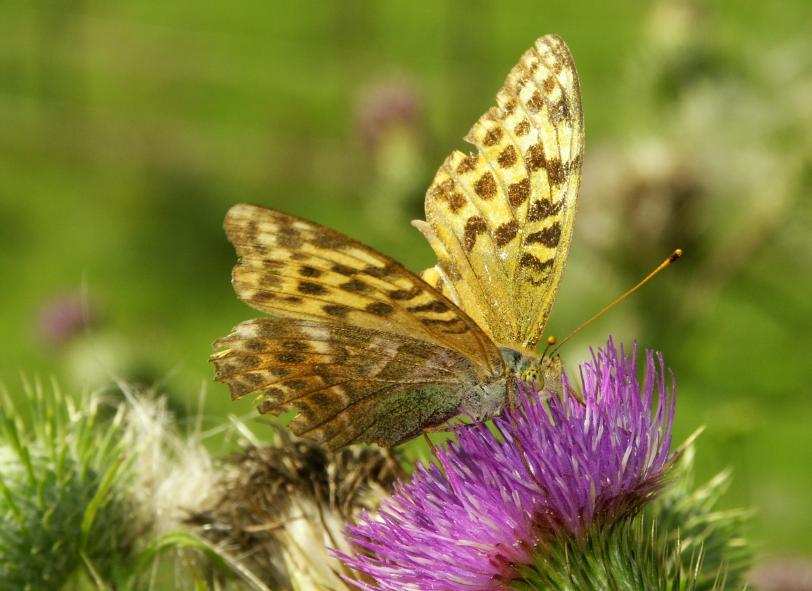 https://cf.ltkcdn.net/french/images/slide/124804-812x591-butterfly.jpg
