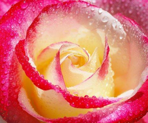https://cf.ltkcdn.net/french/images/slide/124814-480x400-romantic1.jpg