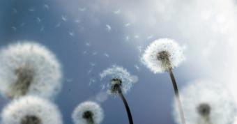 https://cf.ltkcdn.net/french/images/slide/124719-850x445-windy.jpg