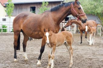 https://cf.ltkcdn.net/french/images/slide/124757-849x565-foal.jpg
