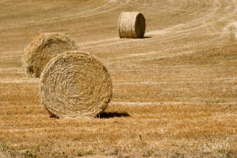 https://cf.ltkcdn.net/french/images/slide/124758-848x566-farmland.jpg