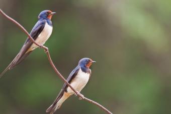 https://cf.ltkcdn.net/french/images/slide/124805-849x565-birdies.jpg