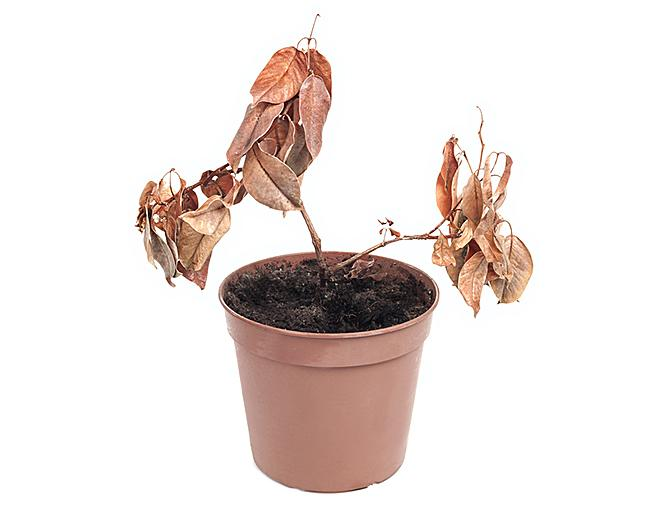 https://cf.ltkcdn.net/fun/images/slide/205992-668x510-Dead-plant-in-pot.jpg