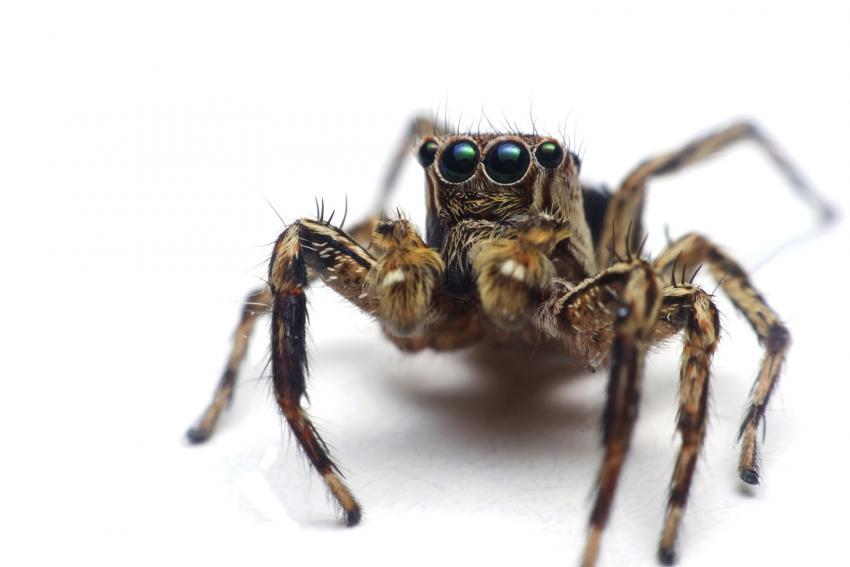 https://cf.ltkcdn.net/fun/images/slide/210400-850x567-Spider-phobia.jpg