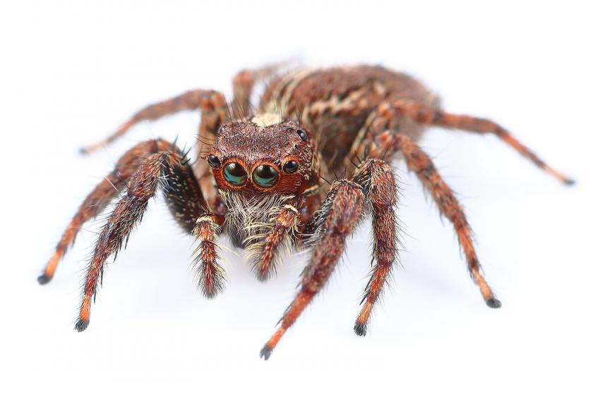 https://cf.ltkcdn.net/fun/images/slide/227052-850x566-One-home-spider.jpg