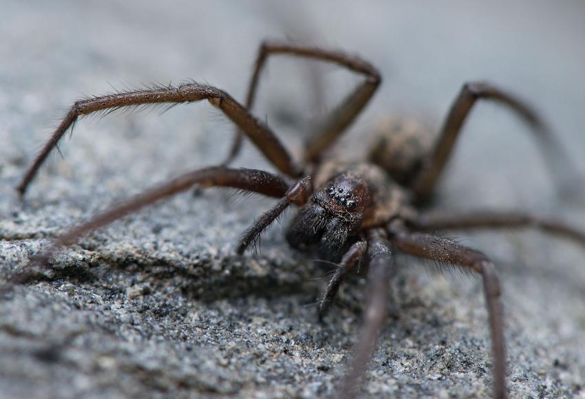 https://cf.ltkcdn.net/fun/images/slide/227063-850x580-black-wolf-spider.jpg
