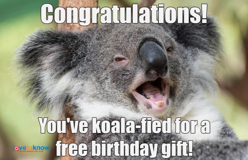 https://cf.ltkcdn.net/fun/images/slide/234002-850x550-5-koala-fied.jpg