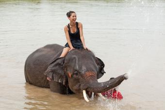 https://cf.ltkcdn.net/fun/images/slide/201838-850x567-Ride-an-elephant.jpg