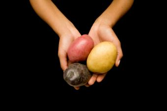 Hands holding colorful potatoes
