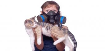 Living with pet odors