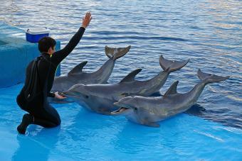 https://cf.ltkcdn.net/fun/images/slide/210395-850x567-Dolphin-trainer.jpg