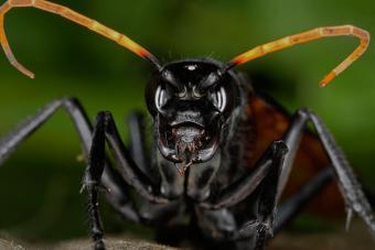 https://cf.ltkcdn.net/fun/images/slide/227067-850x567-Tarantula-hawk-wasp.jpg