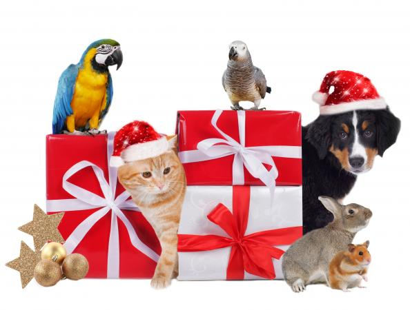 Christmas gifts and animals