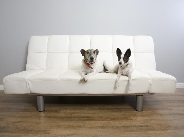 futon with dogs