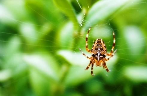 Spider | LoveToKnow