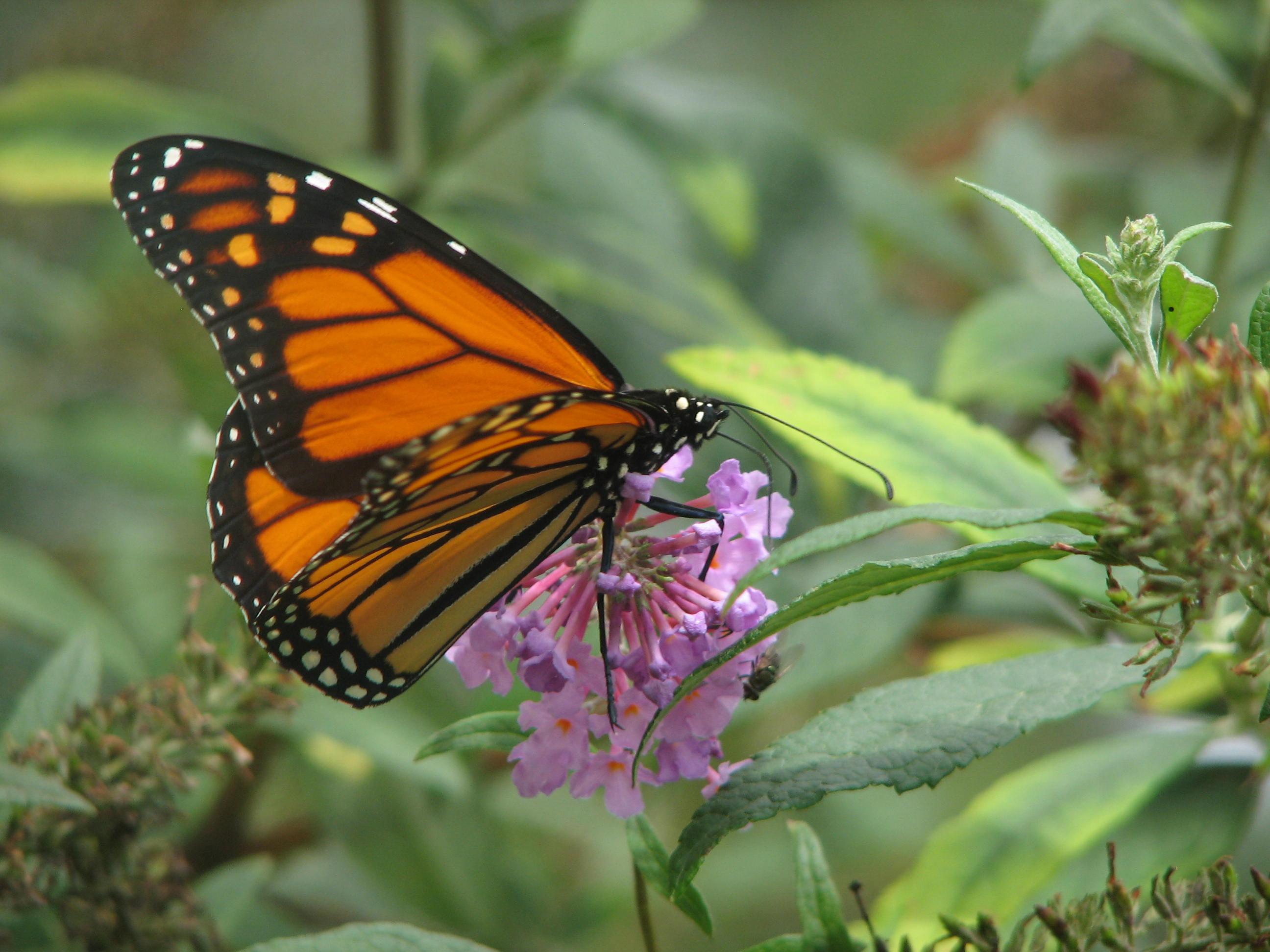 Butterfly Garden Plan