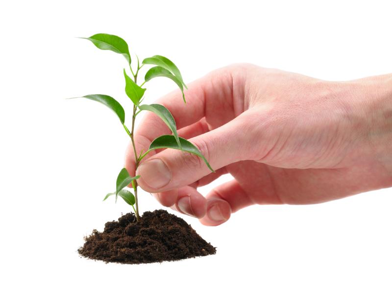 free-tree-seedling-1.jpg