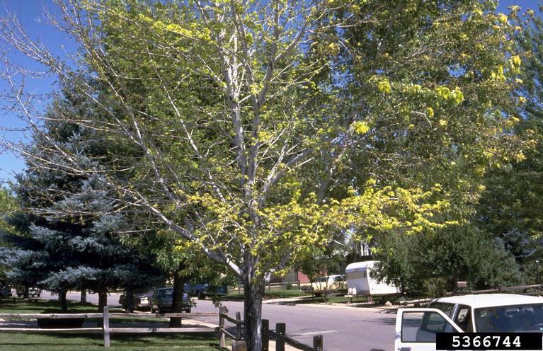 4 Ways to Identify Oak Trees  wikiHow