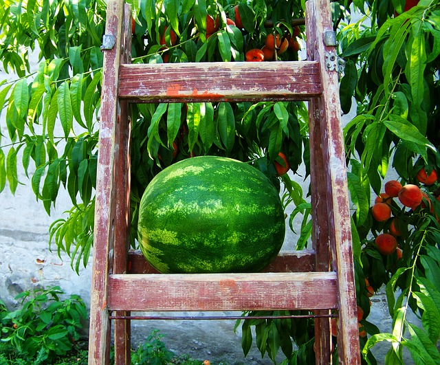 Tips For Growing Watermelon Lovetoknow