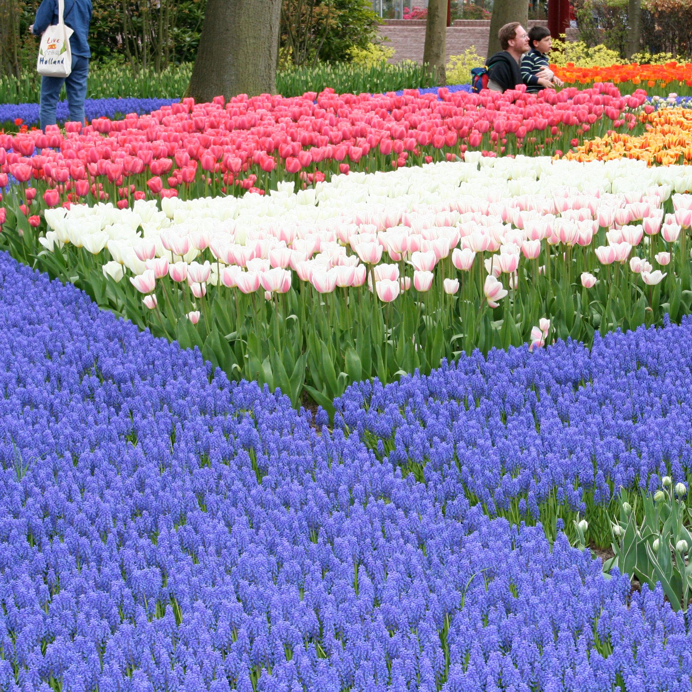 Types of blue flowers lovetoknow mightylinksfo