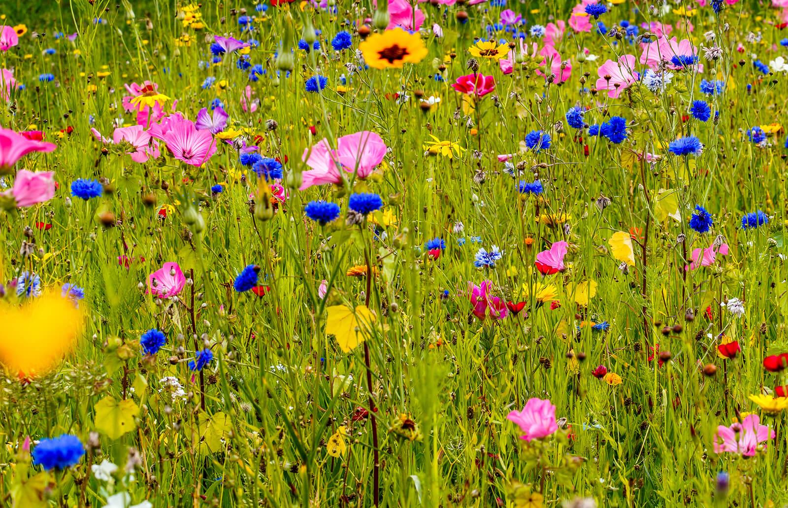 Wildflower Gardening Lovetoknow