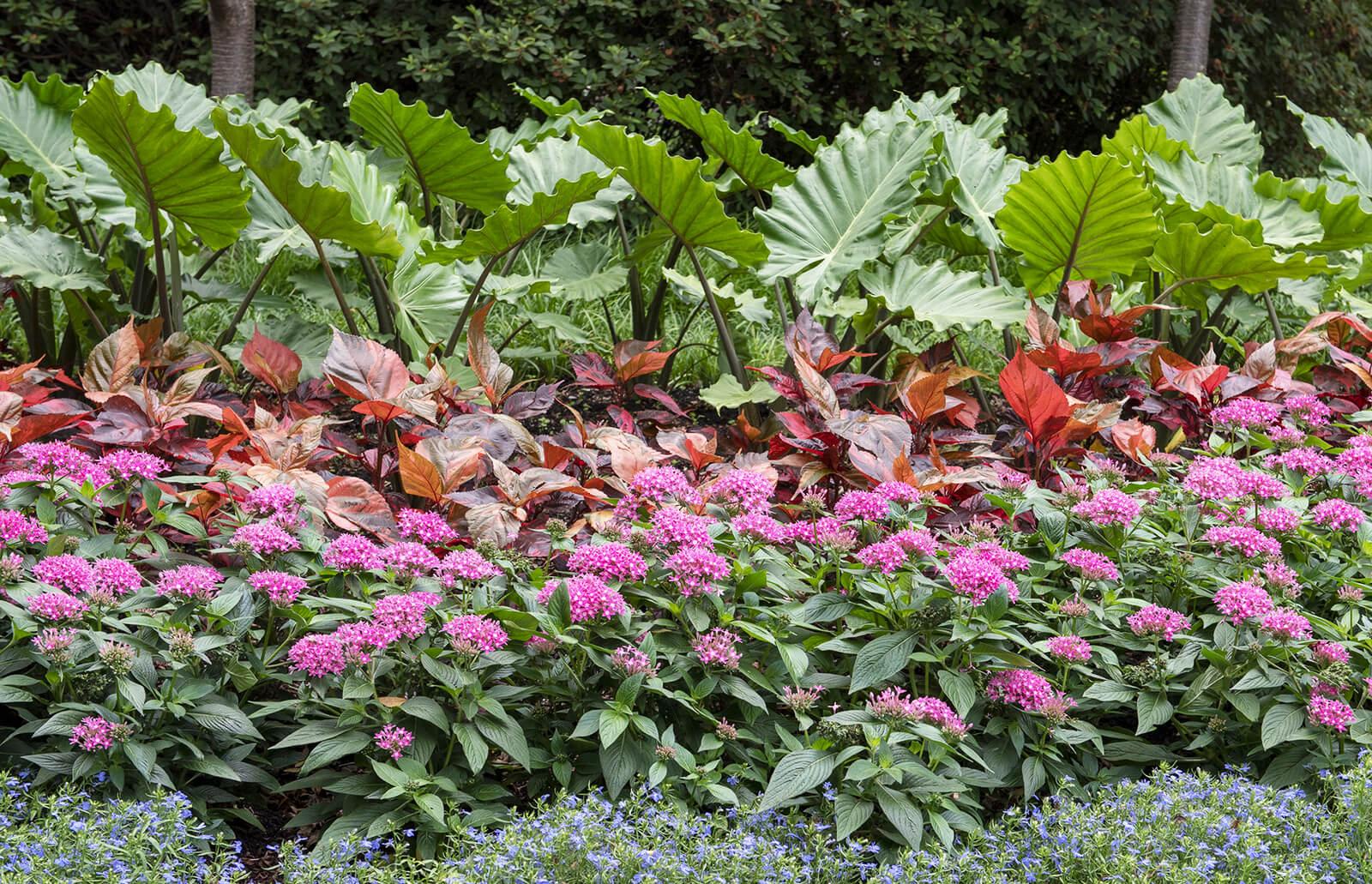 Rain Garden Design Planning And Tips Lovetoknow