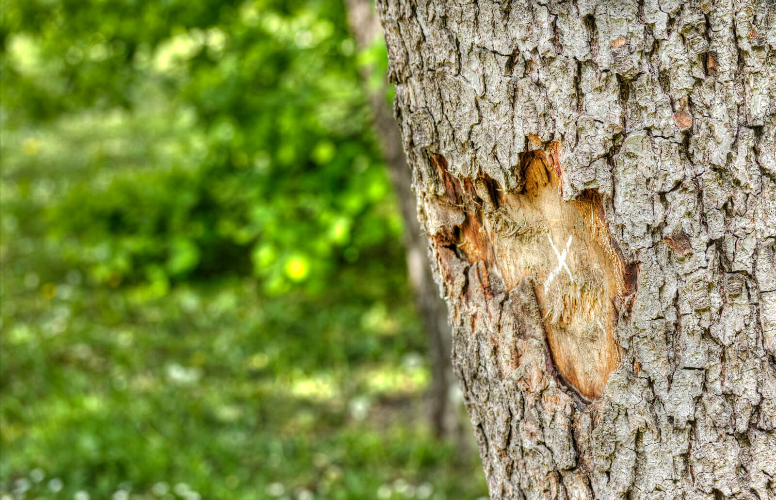 How To Save A Tree With Damaged Bark Lovetoknow