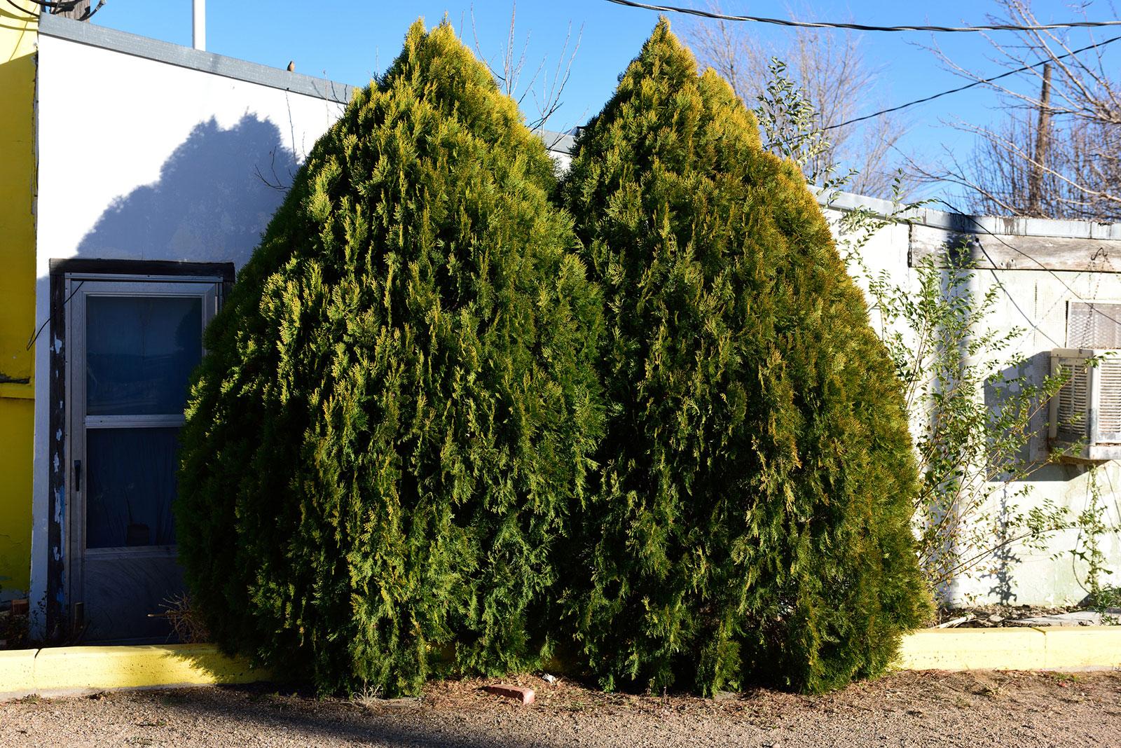 Cypress Trees Lovetoknow