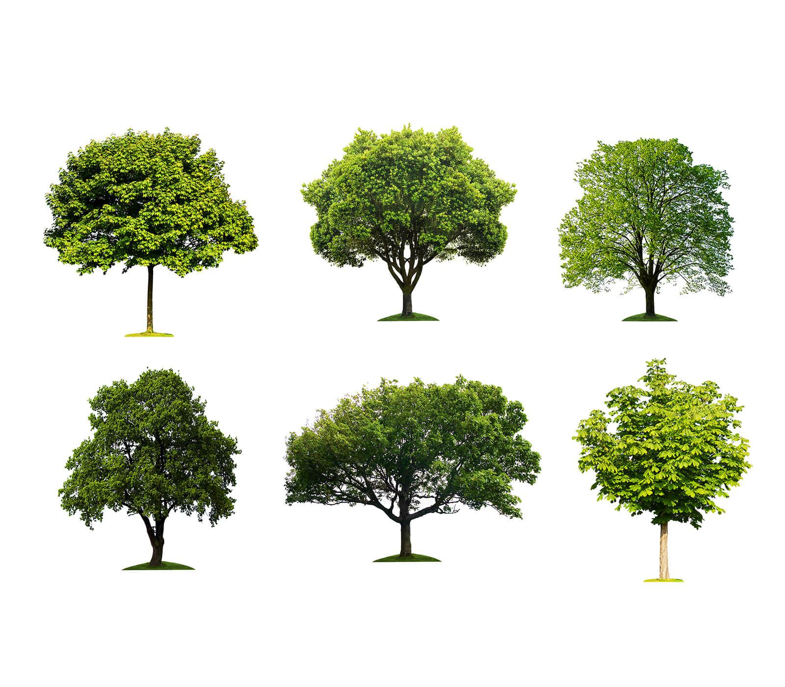1-tree-identification.jpg