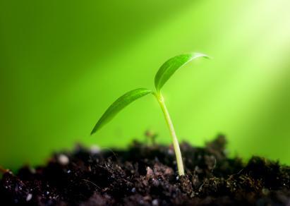 Seedling-in-Light.jpg