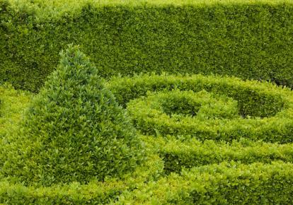 https://cf.ltkcdn.net/garden/images/slide/112019-414x290-Boxwood1.jpg
