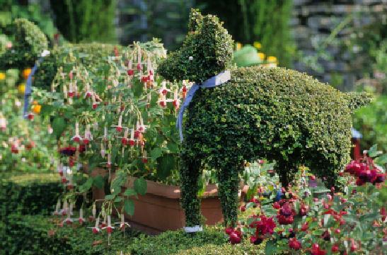https://cf.ltkcdn.net/garden/images/slide/112020-547x360-Dogtopiary.jpg